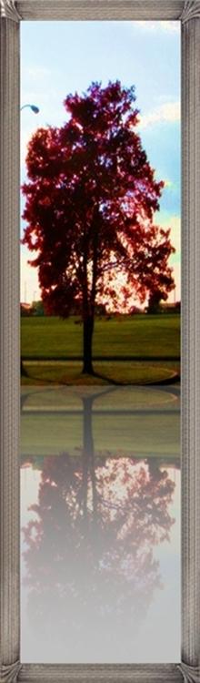lonely-tree