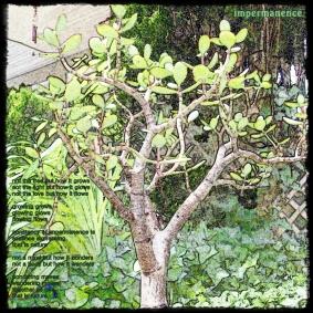 imperm and jade jpg