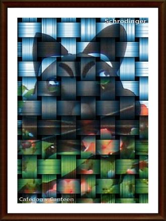 shrodinger-cat.jpg