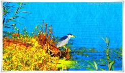 bird-at-water