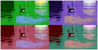 duck-in-colors.jpg