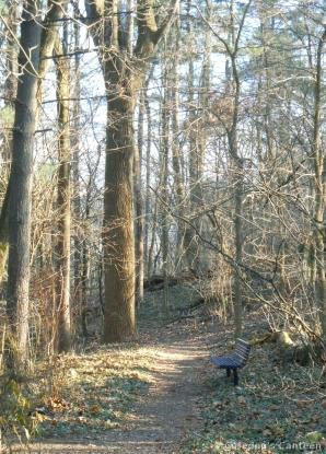 foresty-bench.jpg