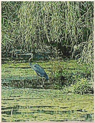 heron-blue.jpg