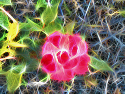 neuro -rose.png